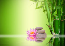Zen garden. With waterlily, bamboo, rocks and water Royalty Free Stock Photography