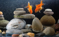Zen goldfish Royalty Free Stock Image
