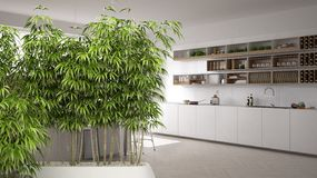 Zen interior with potted bamboo plant, natural interior design concept, contemporary white kitchen, minimalistic architecture. Zen interior with potted bamboo royalty free stock images