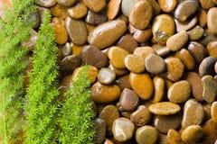 Zen kamienie z zieloną trawą fotografia stock
