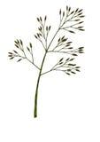 Zen - lame de l'herbe (2008) Images stock