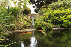 Zen like pond with a waterfall. Relaxing, zen like pond with a waterfall, koi fish and tropical plants Royalty Free Stock Photography