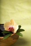 Zen-like scene with flower Royalty Free Stock Image