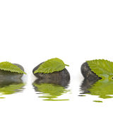 Zen like spa. With green leafs Royalty Free Stock Photos