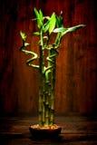 Zen Meditation Bamboo Plant för tyst meditation Arkivbilder