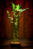 Zen Meditation Bamboo Plant for Quiet Meditation Stock Images