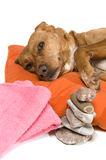Zen moment for dog Royalty Free Stock Photo