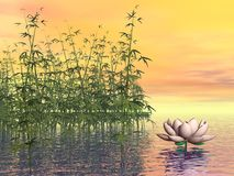 Zen nature - 3D render Royalty Free Stock Photography