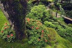 Zen ogród latem zdjęcia royalty free