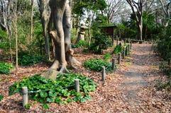 Zen park Zdjęcia Royalty Free