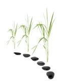 Zen Pathway Stock Images