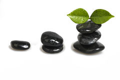 Zen pebble and green leaf Stock Images