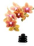 Zen pebbles balance Stock Images