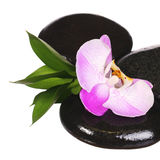 Zen pebbles. Spa Stones and Pink Orchid Flower with Green Leaves Stock Photography
