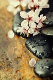 Zen pebbles with spring tree. Stone spa , branch blossoming cherry on wooden background Royalty Free Stock Photo