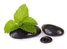 Zen pebbles. Stone spa and mint leaf. Isolated Stock Photos
