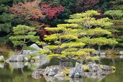 Zen pine tree. Japanese zen garden in kinkakuji temple park, Kyoto Royalty Free Stock Image