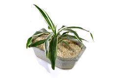 Zen Plant in a granite vessel Royalty Free Stock Photography