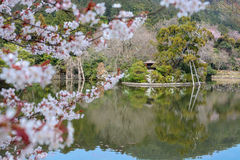 Zen pond garden and cherry tree at Ryoan-ji in Kyoto, focus is on the background. White cherry tree blossoms and beautifully landscaped Zen garden and pond at Stock Photo