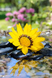 Zen Reflection. Yellow flower and reflection in water with pebbles Stock Images