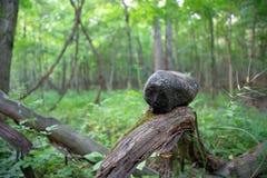 Zen Rock Balanced on a log stock photography