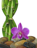 Zen Rock, Bamboo and Orchid Background Stock Photos