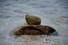 Zen Rock in the Ocean Stock Images