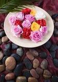 Zen roses Royalty Free Stock Photo