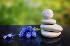 Zen skład, kamienie dla masażu i błękitni kwiaty Miskuri na okrzesanym granitu stole w lecie, uprawiamy ogródek Fotografia Royalty Free