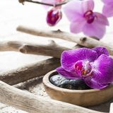 Zen spa decor for ayurveda spirit. Beautiful still-life with orchids, pebbles, wood and stones for feng shui or beauty zen center Royalty Free Stock Photography