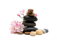 Zen / spa stones with flowers isolated on white background royalty free stock images