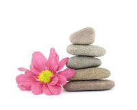 Zen / spa stones with flowers Stock Photography