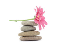 Zen / spa stones with flowers Royalty Free Stock Image