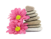 Zen / spa stones with flowers. Therapeutic zen / spa stones with flowers isolated Royalty Free Stock Images