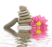 Zen / spa stones with flowers Royalty Free Stock Images