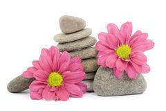 Zen / spa stones with flowers Royalty Free Stock Photos