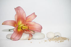 Zen Spa Stones and lily. Zen abstract of white spa stones and lily flower Stock Image