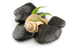 Zen spa stones with sea shell Stock Image