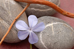 Zen spirit. Photography of a flower with pebbles and wood Stock Photography