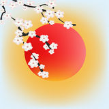 Zen spring. Royalty Free Stock Photo