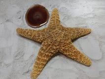 Zen Starfish Fotografie Stock Libere da Diritti
