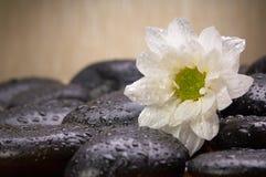 Zen, Steine lizenzfreies stockbild