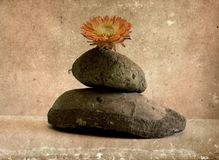 Zen still life with flower Stock Photo