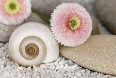 Zen Still Life With Pebble And Daisy royalty free stock photos
