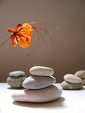 Zen still life with tropical flower. Pebble stacks and flower still life Stock Photo