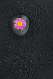 Zen stone  and flower with water drops Stock Photos