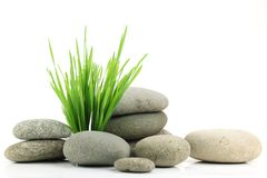 Zen stone with fresh grass Stock Images