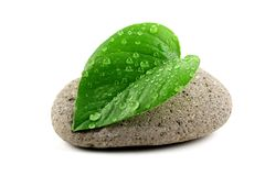 Zen stone with leaf Royalty Free Stock Photo