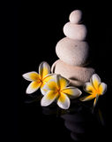 Zen stone pyramid with three white gentle frangapani plumeria flowers after rain on the black reflective background. Low key3 royalty free stock images