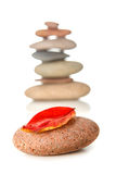 Zen stone with red dry leaf Royalty Free Stock Images